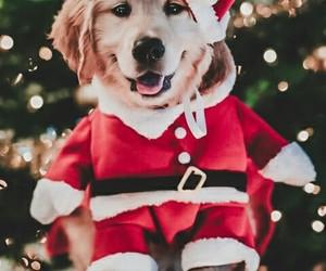 adorable, animals, and christmas image