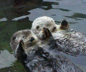 cute, otter, and animals image