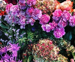 wallpaper, aesthetic, and carnations image