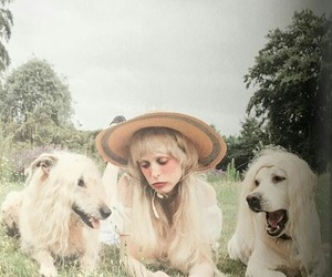 dogs and petite meller image
