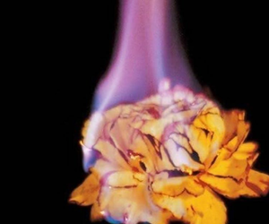 rose and fire image