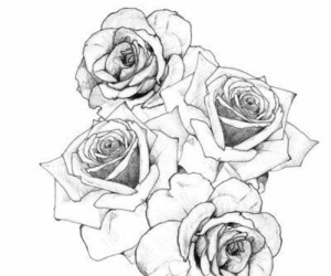 rose, flowers, and drawing image