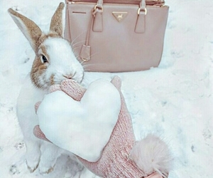 bunny, snow, and cute image