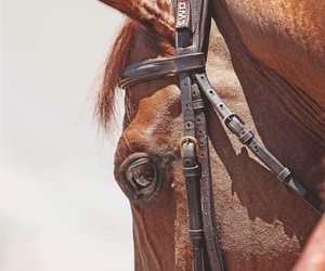 animal, popular, and bridle image