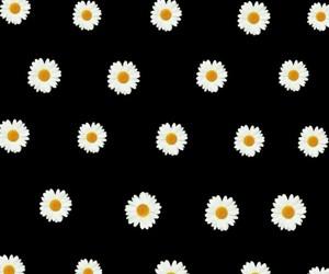 daisies, flower, and margaridas image