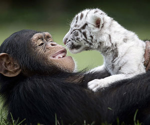 ape, cute, and friendship image