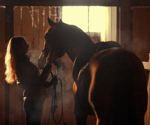 animals, rider, and barn image