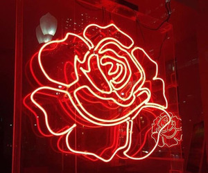 red rose, rose, and aesthetically pleasing image
