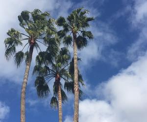 Dream, Island, and palmtree image