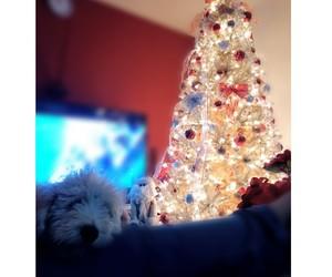 blanco, dog, and perro image
