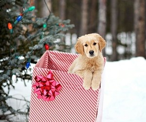 christmas, puppy, and dog image