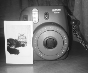 black and white, camera, and cat image