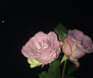love and roses image