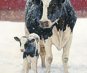 winter, animals, and cow image