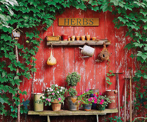 garden and herbs image