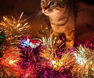 animal, lights, and cat image