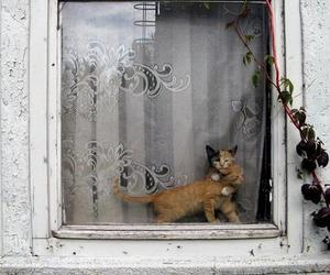 cat, kitten, and window image