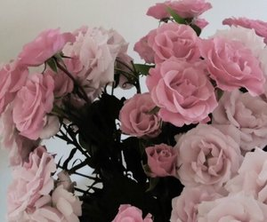 rose, pink, and tumblr image