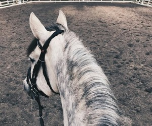 animals, riding, and grey image