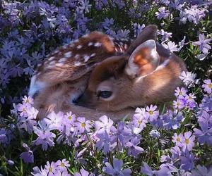 animal, flowers, and deer image