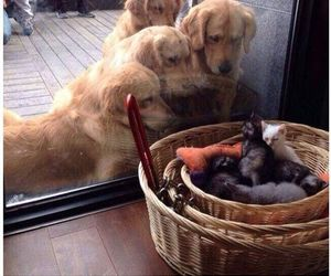 dogs, funny, and kittens image