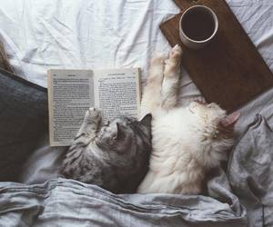 cat, kitty, and book image