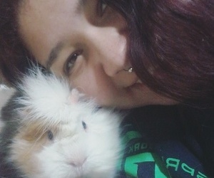 love, cuy, and guinea pig image