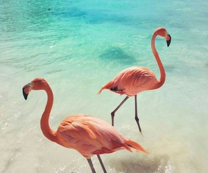 beauty, oceans, and pink image