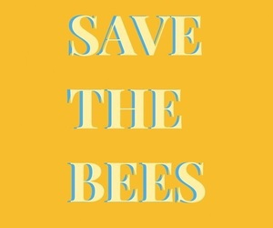 bee, quotes, and yellow image