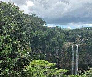 aesthetic, beautiful, and jungle image
