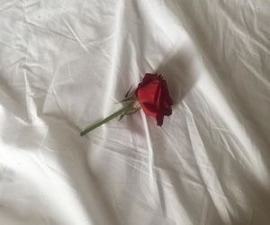 aesthetic, red rose, and rose image