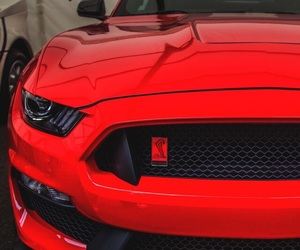 red, car, and mustang image