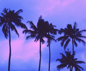 aesthetic, exotic, and palms image