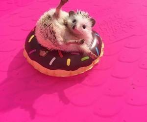 animal, hedgehog, and pink image