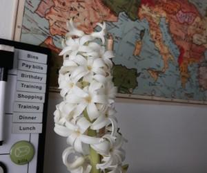 christmas, finland, and hyacinth image