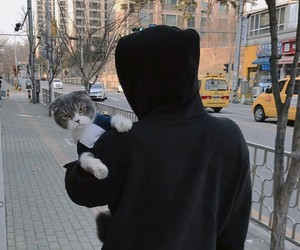 cat, asian, and boy image