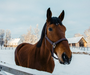 animals, barn, and equestrian image