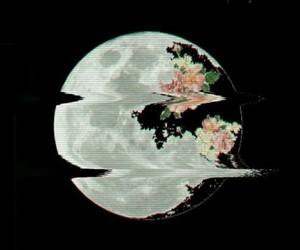 moon, dark, and flowers image