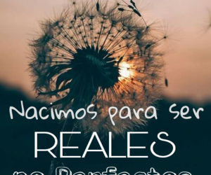 frases, perfectos, and quotes image