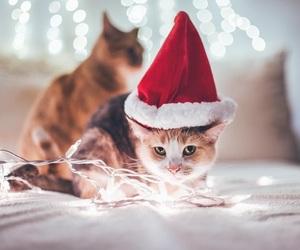 cat, lights, and christmas image