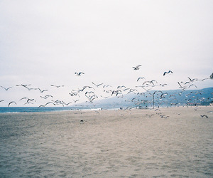 birds, beach, and photography image