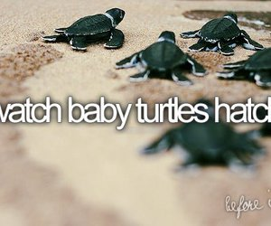 turtle, before i die, and baby image