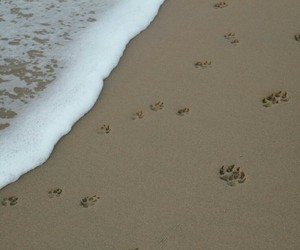 beach, dog, and paws image