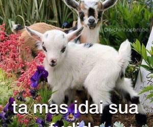 brazil, cabra, and funny image