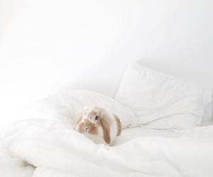 bunny image