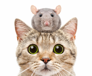 mouse and cat image