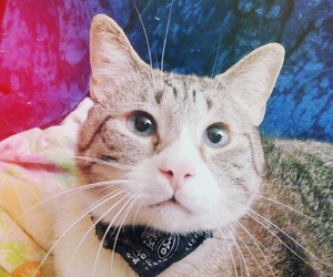 cat, princess, and love cat image
