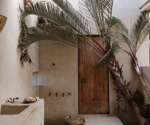 decor, palm trees, and travel image