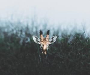 animal, nature, and photography image