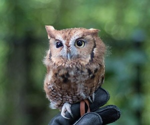 animal, nature, and owl image